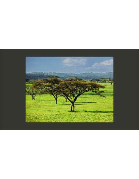 Papier peint ARBRES AFRICAINS - par Artgeist