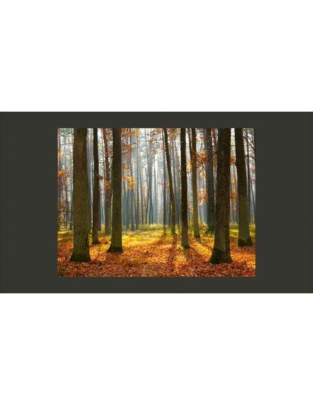 Papier peint AUTUMN TREES - par Artgeist
