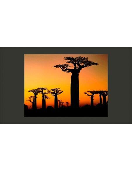 Papier peint BAOBABS AFRICAINS - par Artgeist