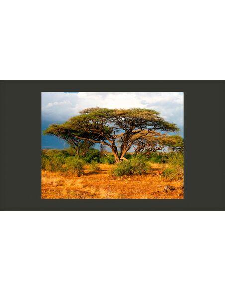 Papier peint RÉSERVE NATIONALE DE SAMBURU, KENYA - par Artgeist