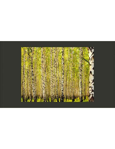 Papier Peint Foret De Bouleaux A 89 90 Chez Recollection