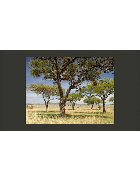 Papier peint ARBRES D'ACACIA PARC NATIONAL DU SERENGETI, AFRIQUE - par Artgeist