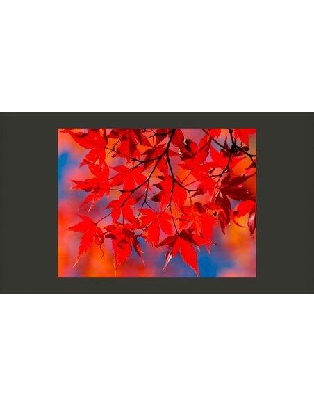 Papier Peint Red Japanese Maple  Arbres et Forêt Artgeist