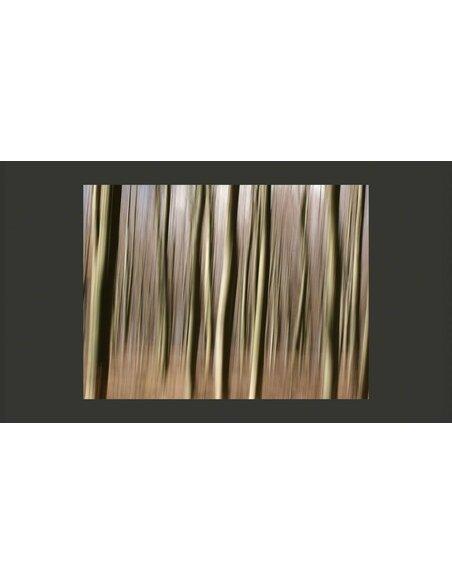 Papier Peint Forêt  Arbres Artgeist