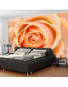 Papier peint PEACH-COLORED ROSE - par Artgeist