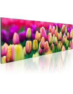 Tableau Panoramique - Tulipes irisées Tulipes Artgeist