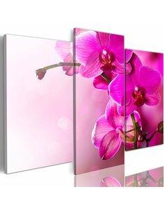 Tableau Orchidée De Couleur Rose Foncé  - par Artgeist