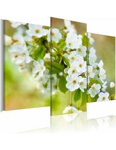 Tableau Motif Avec Les Fleurs Blanches De Cerisier  - par Artgeist