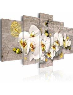 Tableau - 5 tableaux - Sunny orchids - 5 pieces - par Artgeist