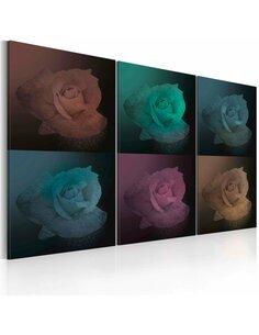 Tableau ROSE EN SIX COULEURS - par Artgeist