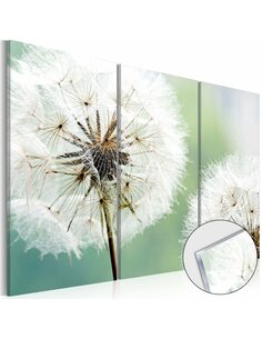 Tableau sur verre acrylique FLUFFY DANDELIONS [GLASS] - par Artgeist