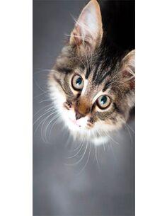 Papier-peint pour porte Charming Kitten  Papier-peints pour porte Artgeist