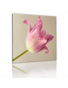 Tableau Fleur De La Tulipe  - par Artgeist