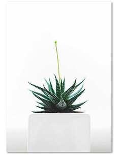 Tableau PLANT imprimé sur bois - par Feeby