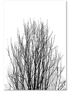 Tableau LES BRANCHES SUPÉRIEURES D'UN ARBRE imprimé sur bois - par Feeby