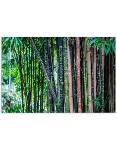 Tableau BAMBOU 3 imprimé sur bois - par Feeby