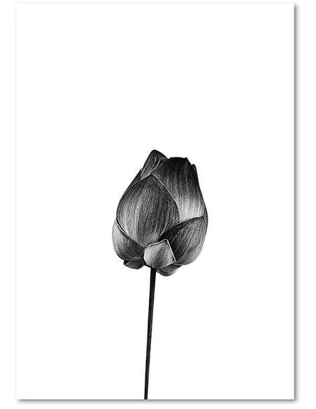 Tableau UNE SEULE FLEUR imprimé sur toile - par Feeby