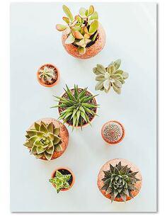 Tableau PLANTES EN POTS imprimé sur toile - par Feeby