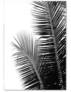 Tableau FEUILLES DE PALMIER 2 imprimé sur toile - par Feeby