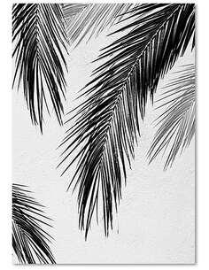 Tableau FEUILLES DE PALMIERS imprimé sur toile - par Feeby