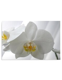 Tableau White Orchids 2