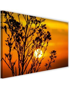 Tableau Sunset Behind A Plant