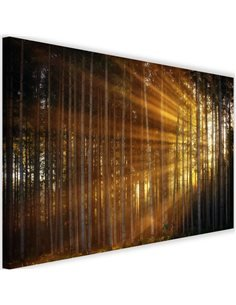 Tableau The Rays Of The Sun In The Dense Forest