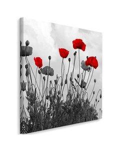 Tableau Red Poppy Flowers