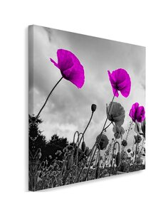 Tableau Purple Poppy Flowers