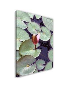 Tableau Leaves Of Water Lilies