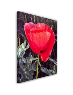 Tableau Red Poppy