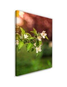 Tableau Jasmine Flowers