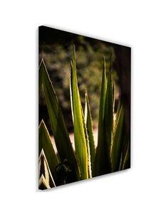 Tableau Prickly Leaves