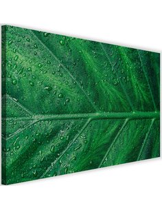Tableau Wet Leaf Close Up