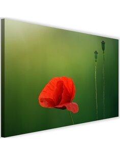 Tableau Poppy Flower On A Green Background