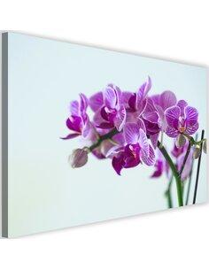 Tableau Purple Orchid