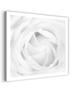 Tableau White Rose 4