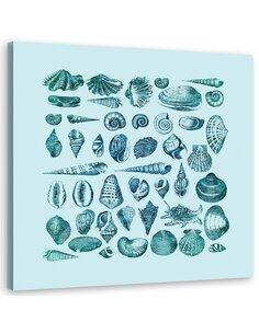 Tableau Shells, Pattern