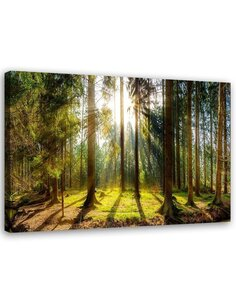 Tableau Sunshine Behind The Trees