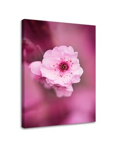 Tableau Cherry Blossom On A Pink Background