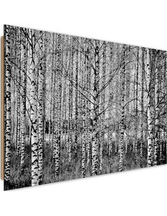Tableau bois black and white birch