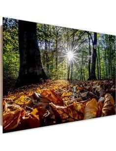 Tableau bois autumn leaves in the sun