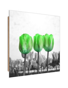 Tableau bois Green tulips in the meadow