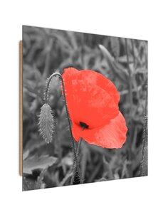 Tableau bois Red poppy in gray
