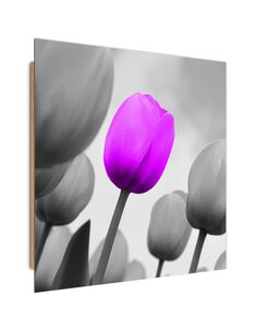 Tableau bois Purple tulip in gray