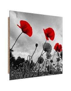 Tableau bois Red poppies on the meadow