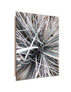 Tableau bois Decorative grass