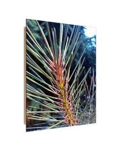 Tableau bois Pine Needle