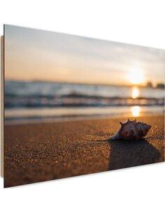 Tableau bois scallop on the beach