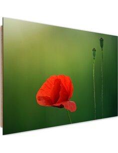 Tableau bois poppy flower on a green background